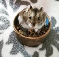 hamster-nourriture