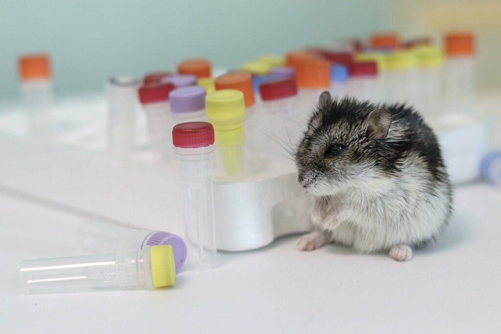maladies hamster